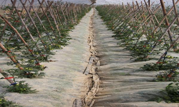 三木集团都山农业生态